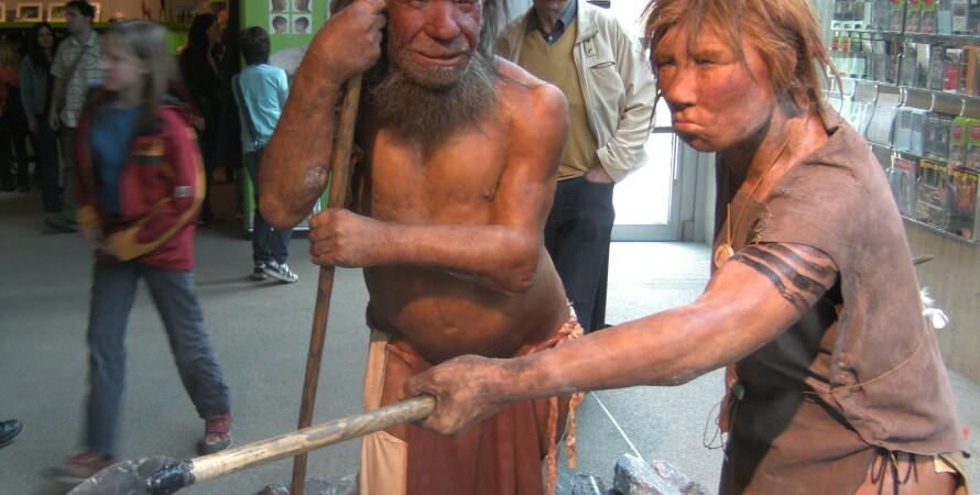 Неандертальский музей, Германия. Фото: Wikipedia