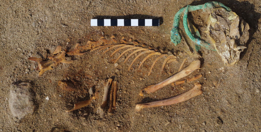 скелет кошки, порт береника, египет