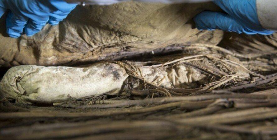 згорток, останки, ембріон, вчені, фото