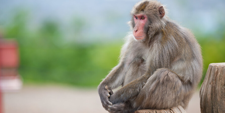 обезьяны украли детей, убийство младенца, животные, индия