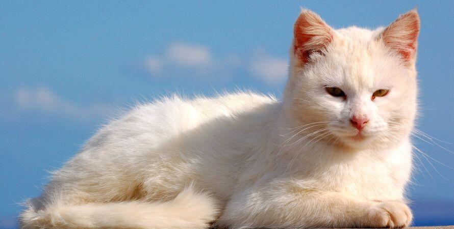 кот, собаки, люди, социальные отношения