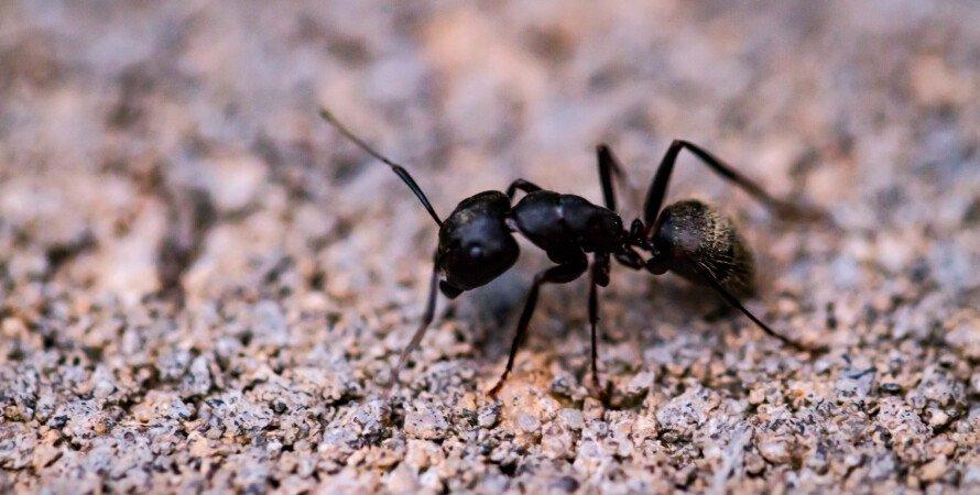 муравей, насекомое, земля, фото