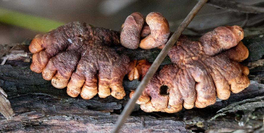 гриб, дерево, пальцы, фото