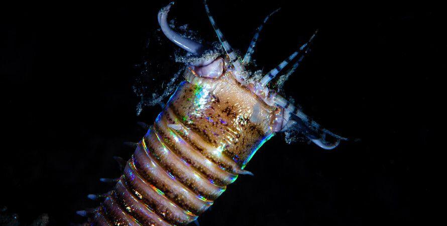 черв'як, нори, скам'янілості, Тихий океан