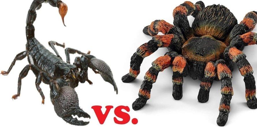 Скорпион против тарантула