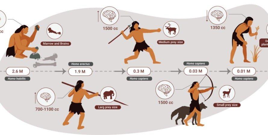 хижаки, збирачі, вегетаріанці, стародавні люди, дієта, їжа