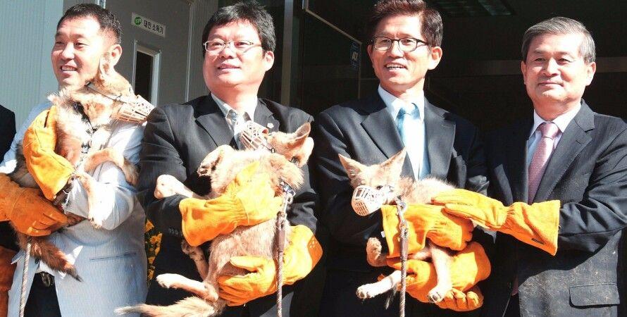 Сотрудники Sooam Biotech с клонами исчезающих койотов / Фото: techinsider.io