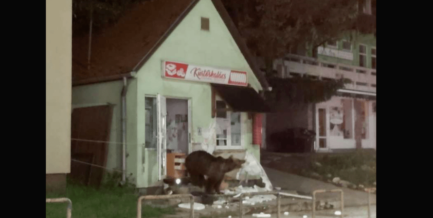 медведь в городе, румыния, фото