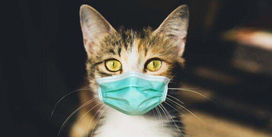 кот коронавирус, ковид, корона, домашний питомец, COVID-19 у кота