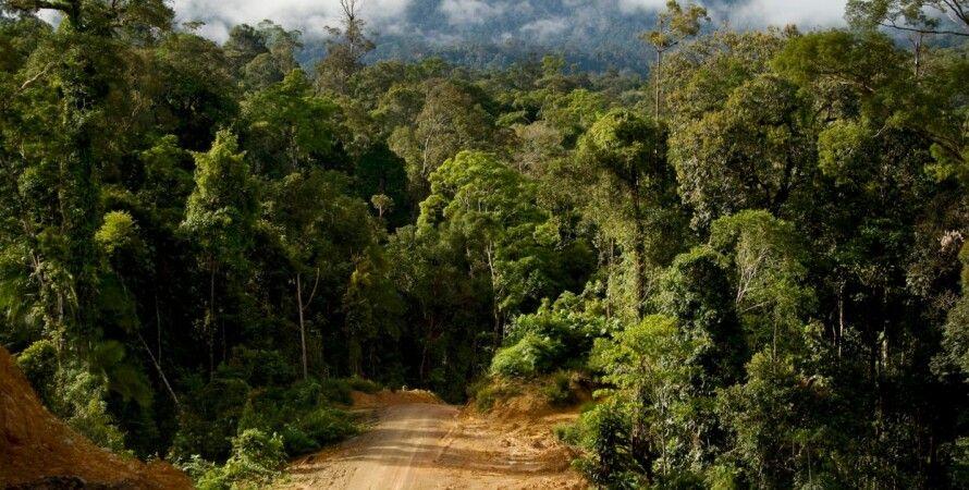 Амазонка, зміна клімату, вуглець, глобальне потепління