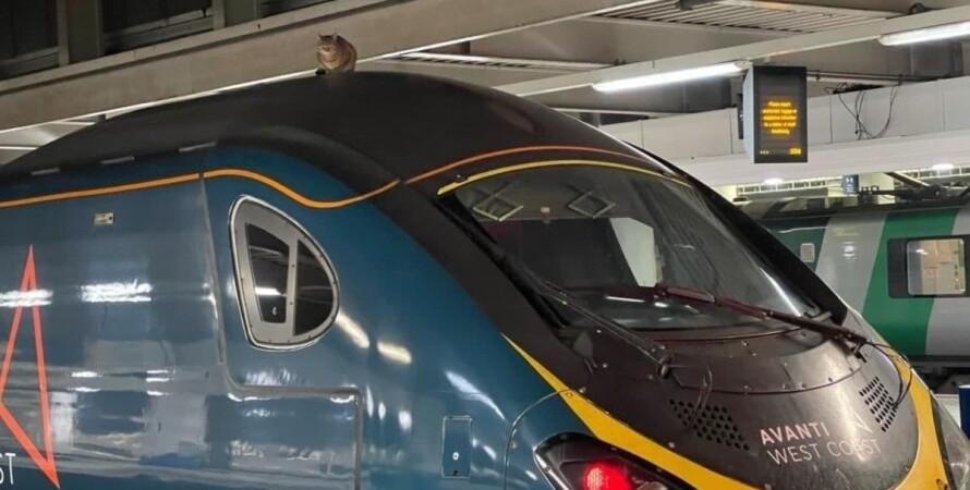 кіт, швидкісний поїзд, Лондон