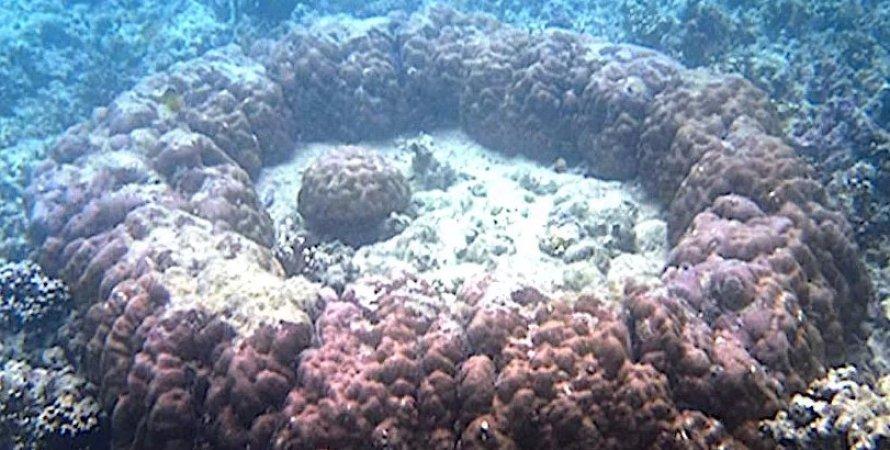 Кораллы, микроатоллы
