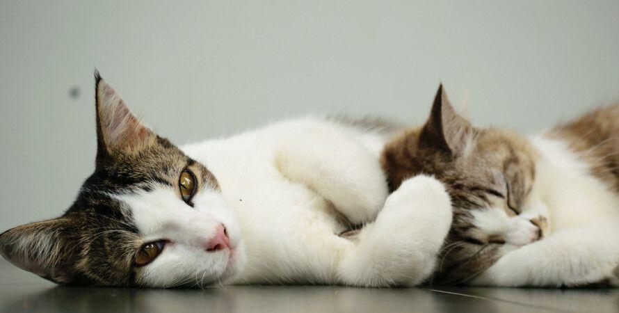 коты, урчание, люди, взаимодействие