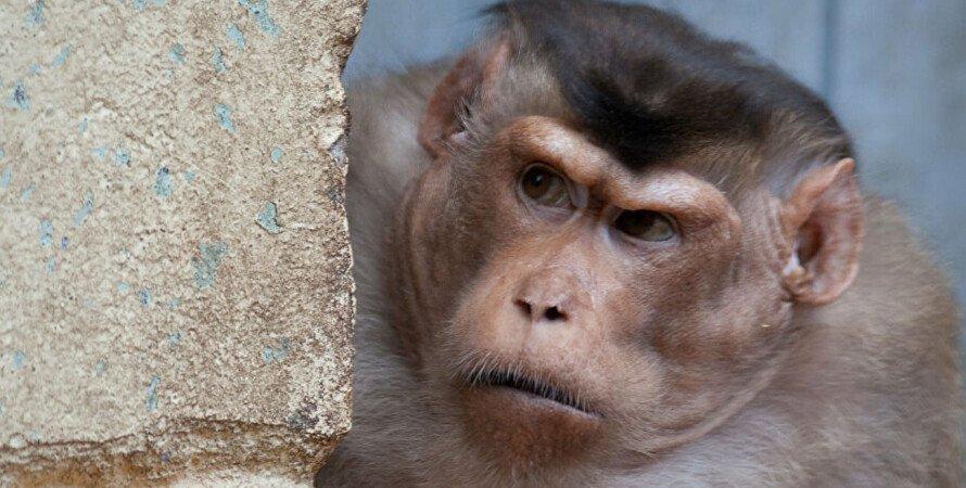 мавпа, крадіжка, гроші