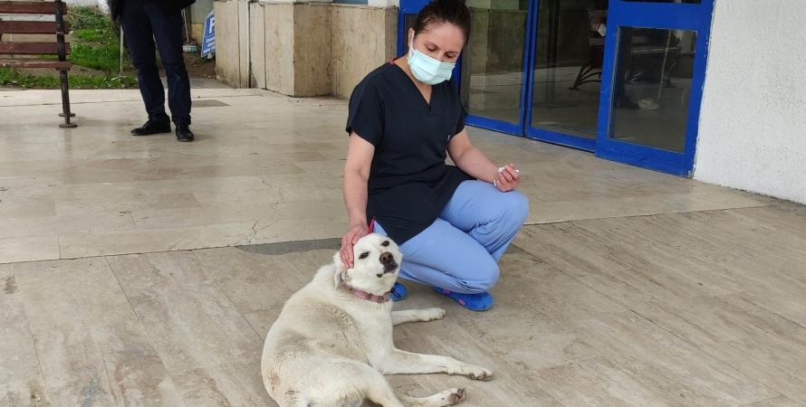 собака, Памук, больница, медсестра, фото
