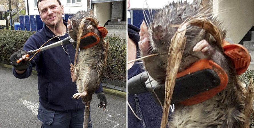 На детской площадке в Лондоне нашли метровую крысу / Фото: Tony Smith/SWNS.com