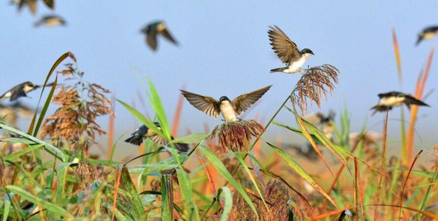 птицы, миграция, перелетные птицы