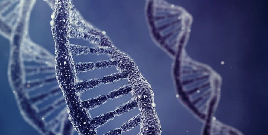 ДНК / Фото: fastcoexist.com