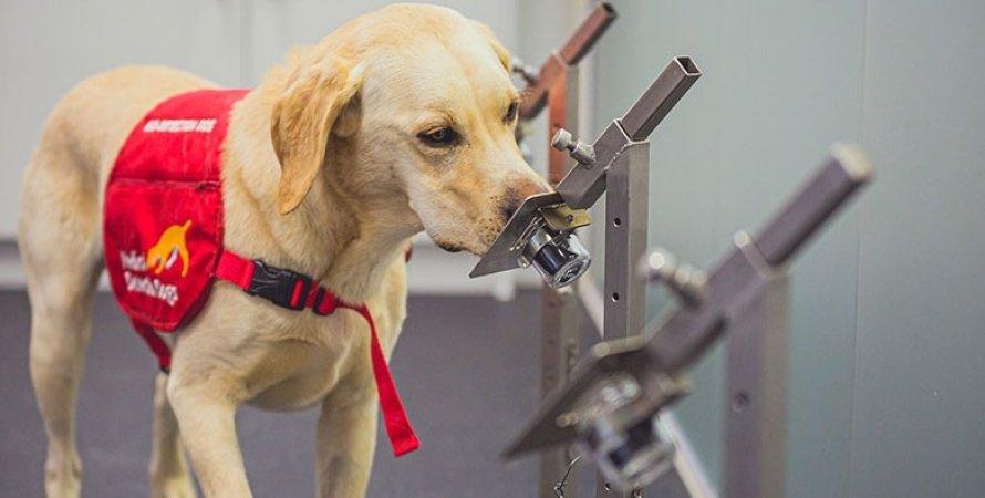 собака, коронавірус, випробування, фото