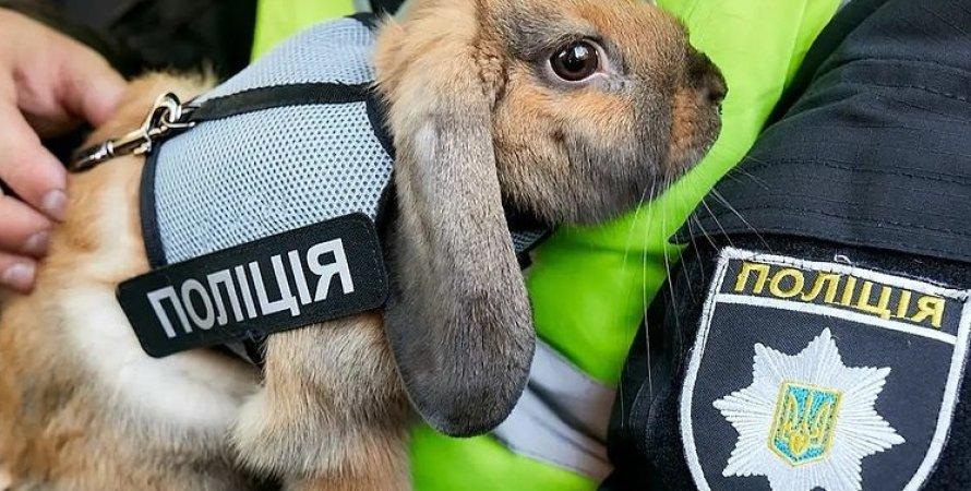 кролик, поліція, Дніпро, кролик-поліцейський
