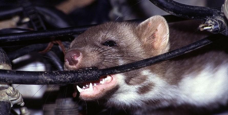 Tesla крысы проводка