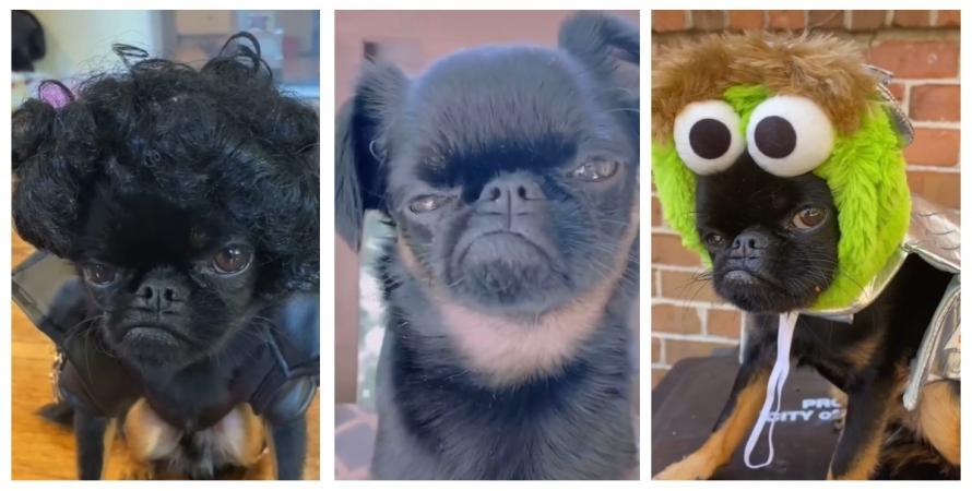 собака, пес, Чіко, перука, шапка