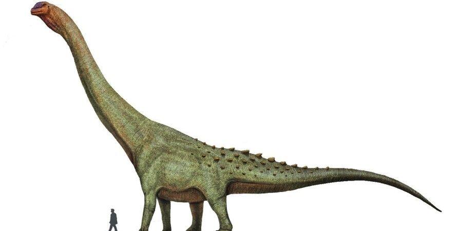 динозаври, кістки, Аргентина, титанозавра, dinosaur