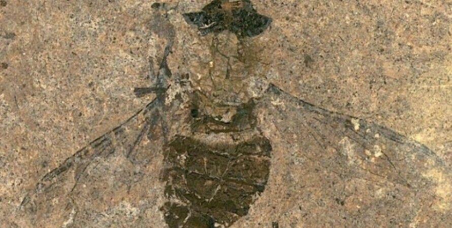 скам'янілість, муха, пилок