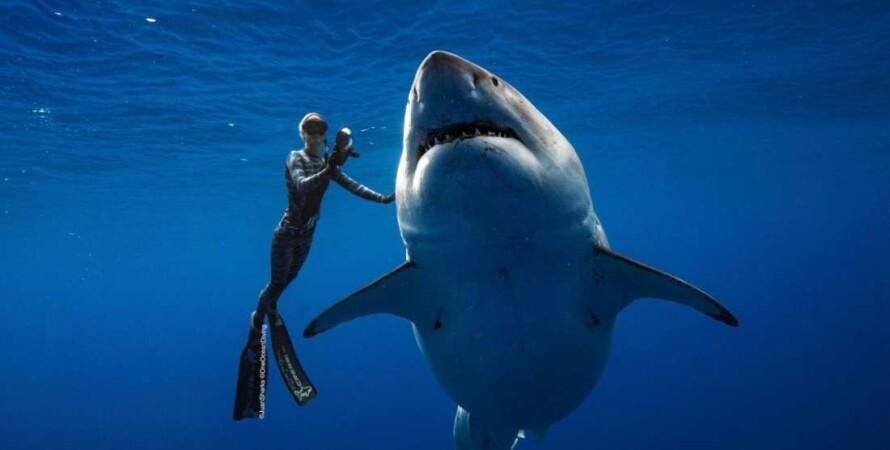 @JUANSHARKS / http://ONEOCEANDIVING.COM / @OceanRamsey