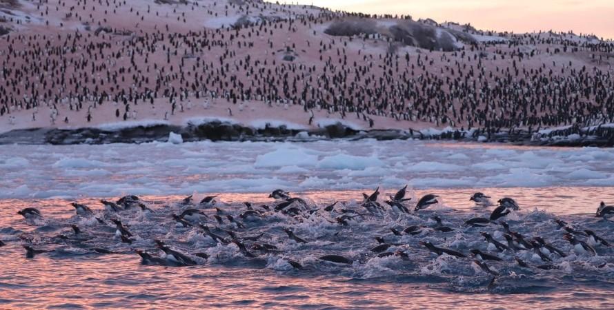 Антарктида, пінгвіни, Академік Вернадський