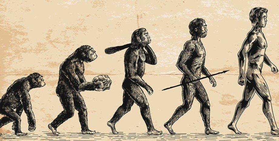 обезьяна, люди, рисунок, эволюция