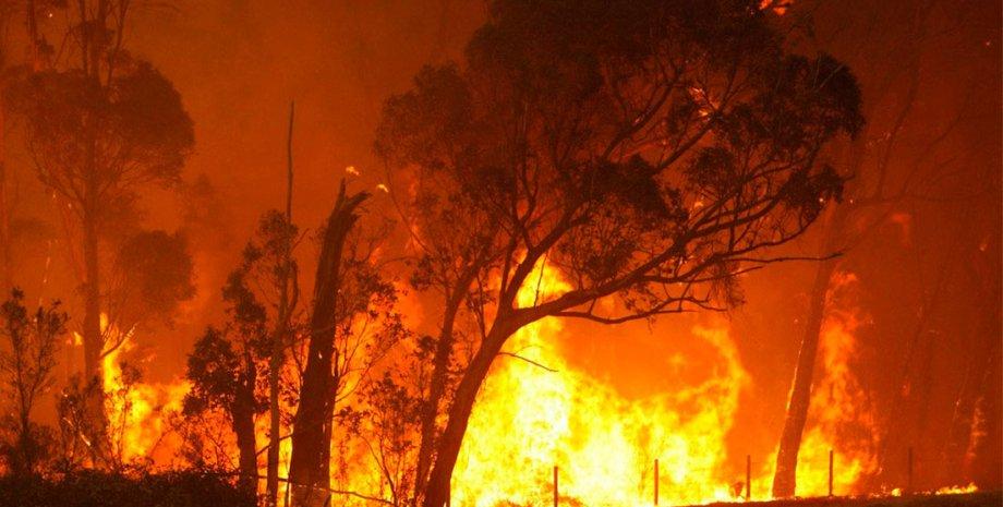 Лесной пожар / Фото из открытого источника