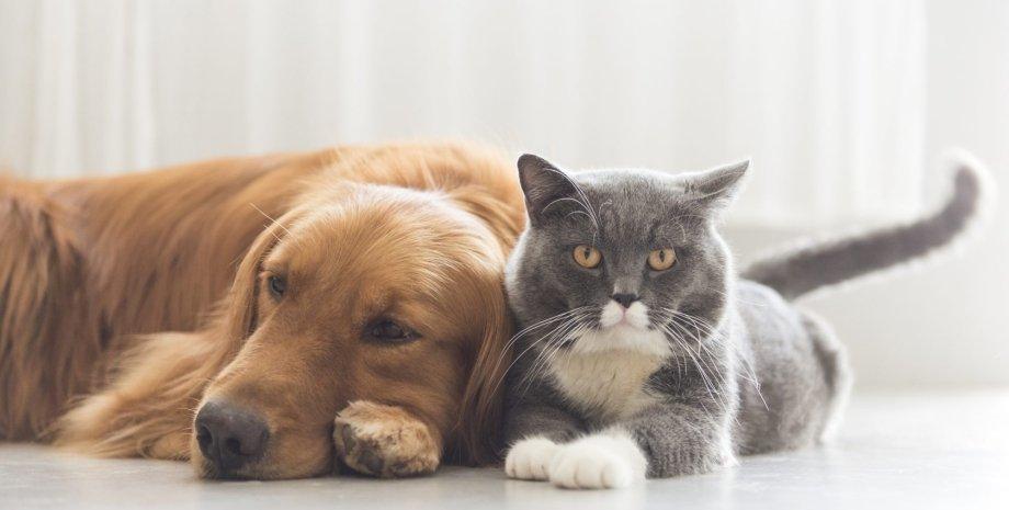 кошка, собака, комната, снимок