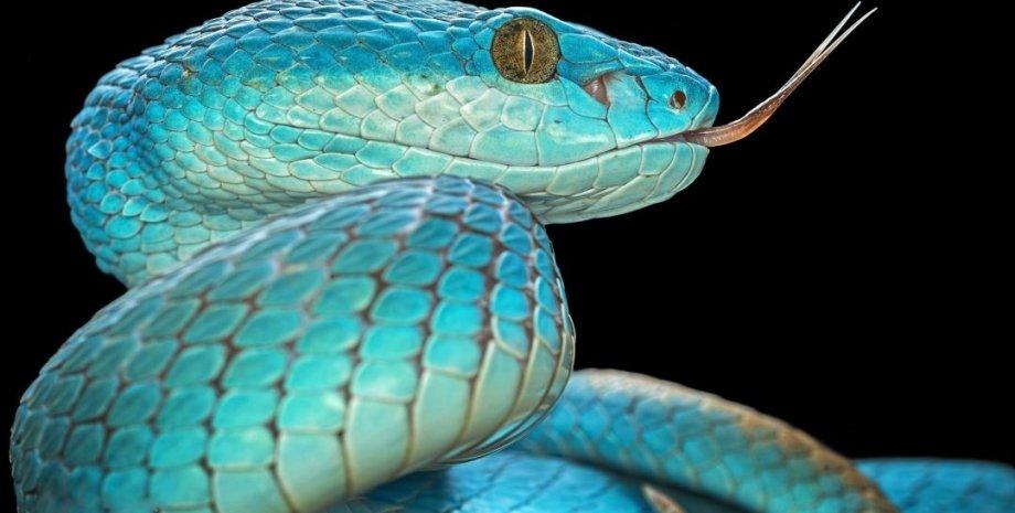змія, мова, очі, фото