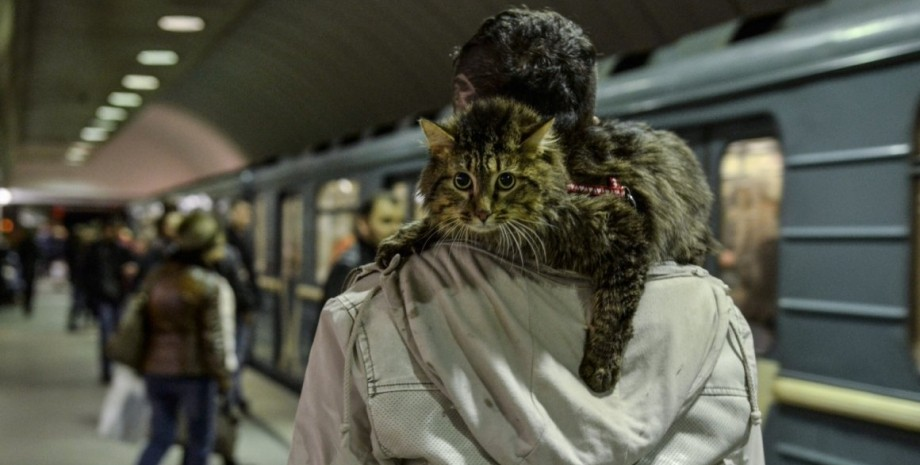 кіт в метро