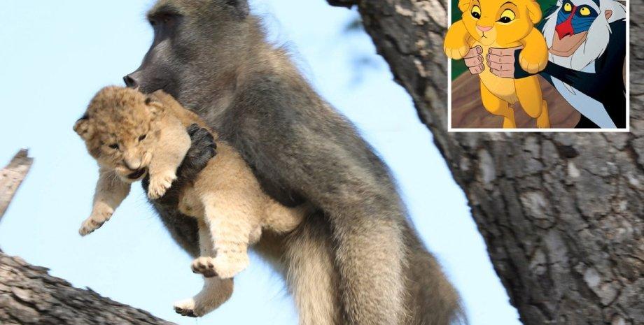 Фото: www.kurtsafari.com/ Magnus News