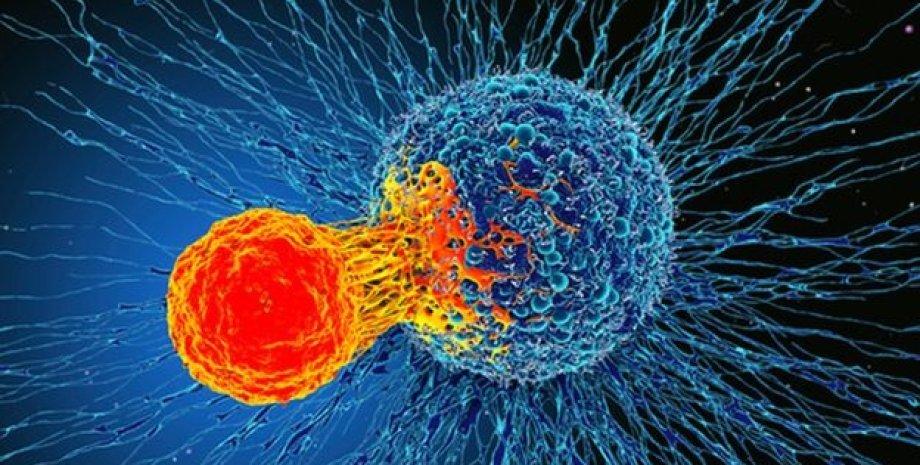 Т-клетка атакует раковую опухоль. Иллюстрация: Science Photo Library