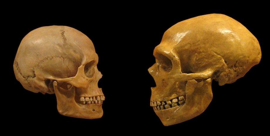 черепа, кістки, фото, люди