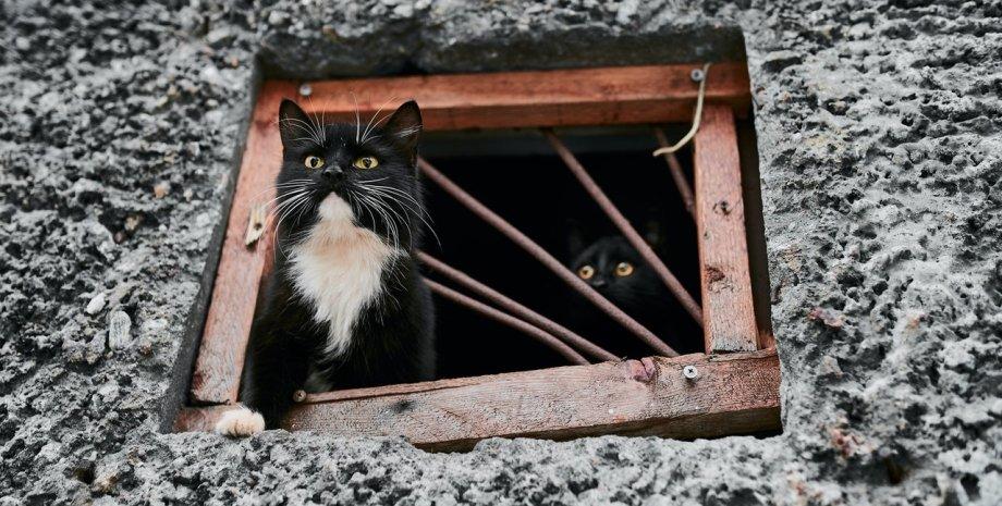коти в підвалі, захист домашніх тварин, покарання для шкуродерів