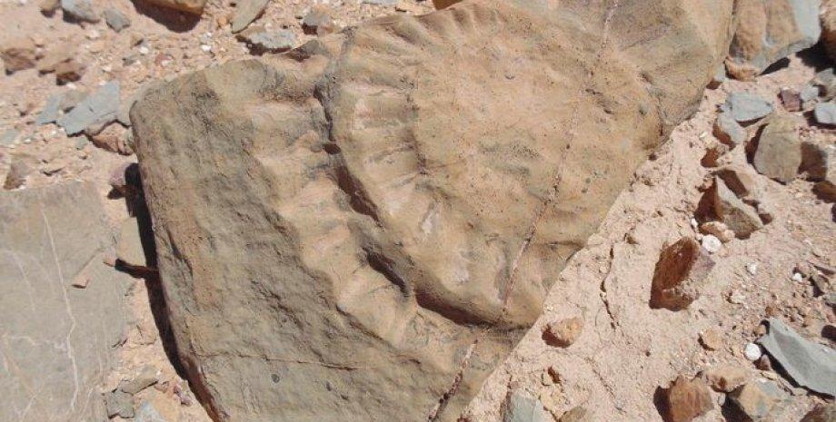 окаменелость птерозавра, камни, песок, фото