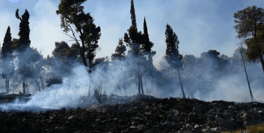 Пожежа в Чорногорії, лісова пожежа, Подгориця