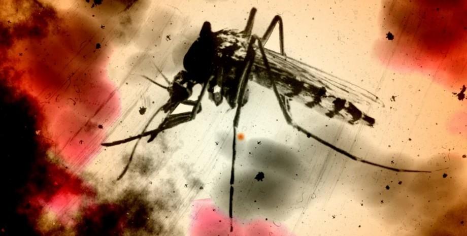 малярийный комар, малярия, вакцина