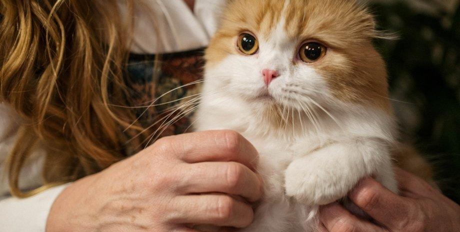 рудий кіт на руках у господині
