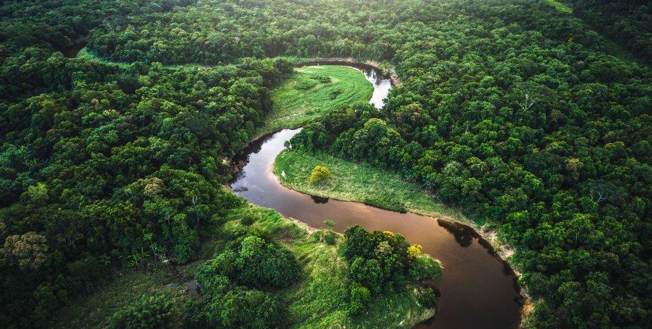 Амазония, деревья, река, фото