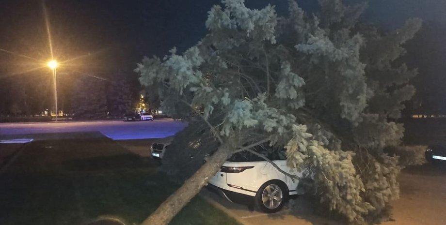 В Одессе дерево рухнул на автомобиль, припаркованный с нарушениями