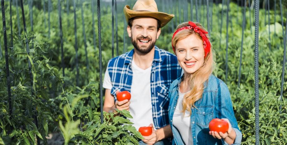 городники з помідорами в руках