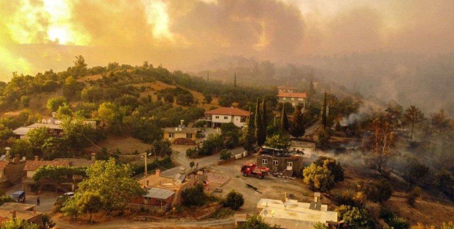 ліс, село, пожежа, фото