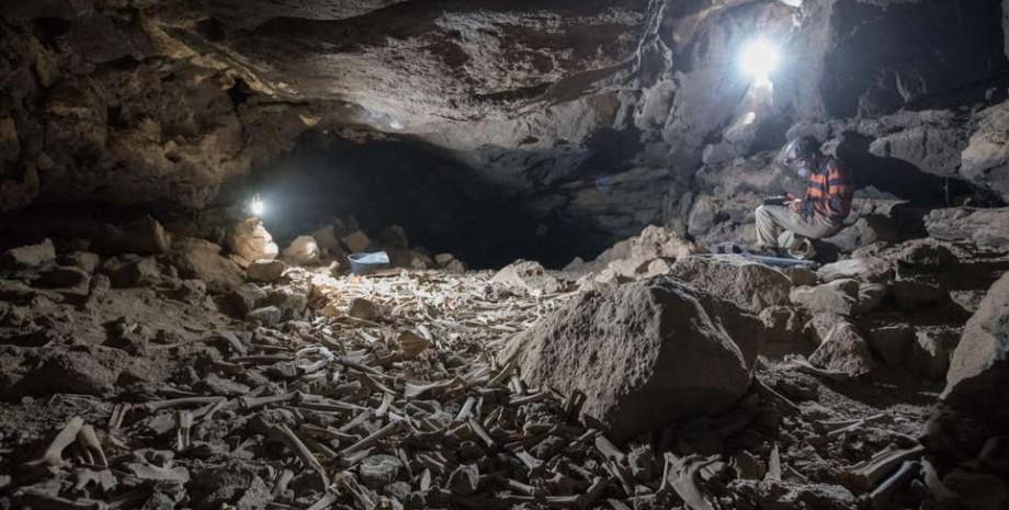 Печера Умм-Джірсан, саудівська аравія, печера кісток, кістки, гієни