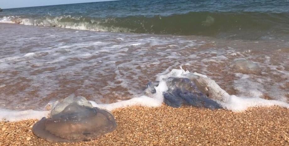 медузы, песок, азовское море, фото
