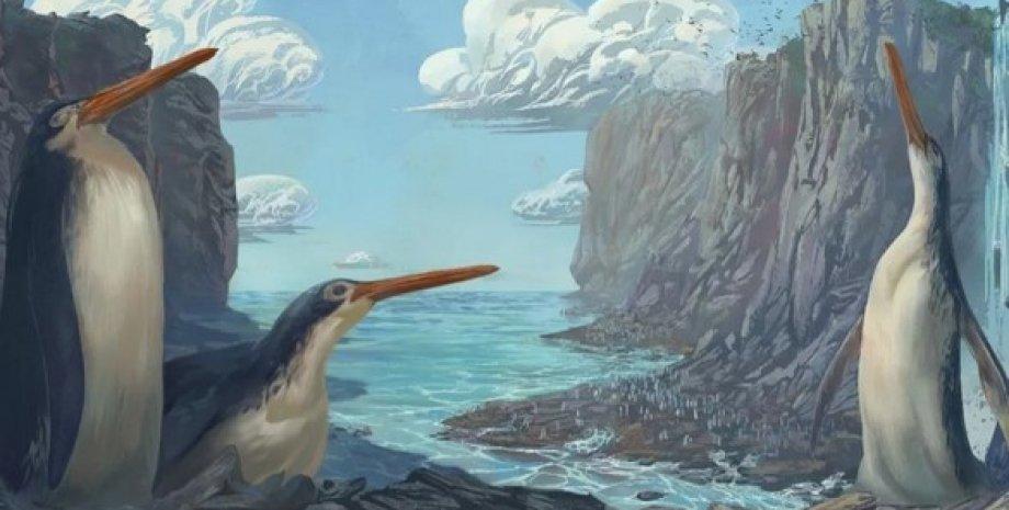 Гигантский пингвин Kairuku waewaeroa. Художественная реконструкция.